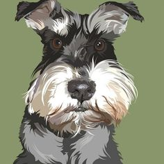 how to draw a realistic miniature schnauzer