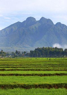 Wonderful Rwanda http://www.travelandtransitions.com/destinations/destination-advice/africa/