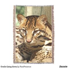 Ocelot lying down throw blanket Down Throw, Ocelot, Photo Memories, Throw Blankets, Party Hats, Are You The One, Family Photos, Art Pieces, Animals