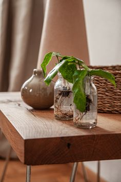 Die Mini-WasserPflanzen (Hydroponic) sind ein absoluter Hingucker fürs Home Office oder fürs Büro. Co2 Neutral, Home Office, Mini, Home Decor, Live Plants, Water Plants, Special Gifts, Natural Materials, Home Decor Accessories