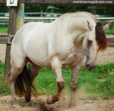 american quarter horse stallions | Triple Jet Cee Jay