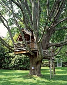 A big or small tree house bring lots of fun into backyard designs and create playful and youthful atmosphere. Tree house designs are wonderful backyard ideas that make adults and kids happy and joyful