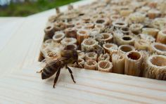 Bee hotel, Insect house, Bumblebee home, Mason bee house, Bee by DILNA HAMMER www.dilnahammer.cz