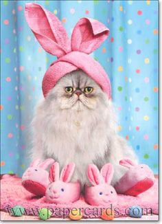 These cats are ready for Easter. Some creative, some traditional: all lookin good in their Easter hats. Do you think you can handle the cute? I Love Cats, Cute Cats, Funny Cats, Funny Animals, Cute Animals, Cats Humor, Funny Horses, Adorable Kittens, Memes Humor