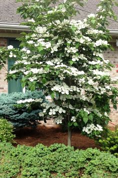 9 Trees for Small Yards - Best Small Trees for Privacy and Shade garden trees privacy Got a Tiny Yard? You Can Still Grow These Totally Gorgeous Trees garden trees privacy Small Trees For Garden, Trees For Front Yard, Small Gardens, Small Landscape Trees, Small Front Garden Ideas Uk, Landscape Bricks, Front Yards, Landscaping Trees, Front Yard Landscaping