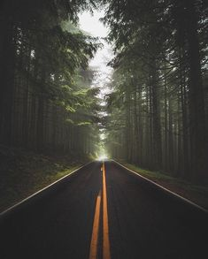 "The World's Greatest Roads on Instagram: ""Road to wanderland  : @ashleyinwanderland : PNW, USA : Tag your road trip team below! . . . #pacificnorthwest #usa #instaroads…"""