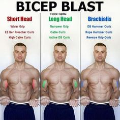 """The bicep has two heads (hence the prefix """"bi""""). The two heads are the long head and the short head. However, there is an additional muscle, the brachialis, which technically is not part of the bicep but contributes to the overall development of your bice Fitness Workouts, Gym Workout Tips, Weight Training Workouts, Fitness Tips, Fitness Motivation, Health Fitness, Lifting Motivation, Gym Fitness, Biceps And Triceps"""