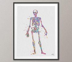 Human Skeleton Anatomy Watercolor Print Medical Art Science