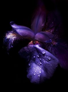 Purple Flower. Photography. Want this in my Garden.