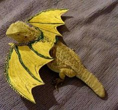 Funny pictures about Bearded dragon is feeling pretty. Oh, and cool pics about Bearded dragon is feeling pretty. Also, Bearded dragon is feeling pretty. Bearded Dragon Wings, Bearded Dragon Costumes, Bearded Dragon Funny, Funny Animal Pictures, Funny Animals, Cute Animals, Unusual Animals, Funny Images, Funny Photos