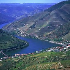 Cruise on Douro river from Oporto to Regua (Port wine region). Group and private river circuits to Port wine region. Algarve, Places Around The World, Around The Worlds, Douro Portugal, Sea Activities, Wine Tourism, Douro Valley, Port Wine, Excursion