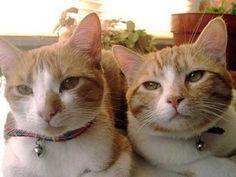 Hongos en los gatos
