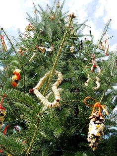 Easy project for making colorful and edible decorations for your winter evergreen trees. Hollow out oranges, string cereal and berries and mold tiny birdseed rings. Outdoor Christmas Tree Decorations, Outdoor Trees, Outdoor Gardens, Diy Christmas Tree, Xmas Tree, Merry Christmas, Rustic Christmas, Christmas Stuff, Bird Seed Ornaments
