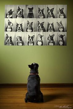 So cute for a kids play room, and a great way to remember those four-legged members of the family after they're gone...