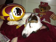Meet Maui! From Amy C. #HTTR