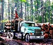 Standing timber buyers in PA. Lapp Lumber Co. 717-442-4116