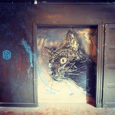 C215 #streetart #C215 #tourparis13