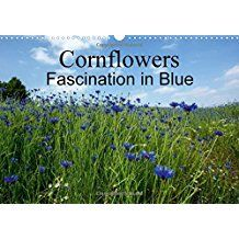 Cornflowers Fascination in Blue (Wall Calendar 2018 DIN A3 Landscape): Be enchanted by beautiful photographs of these lovely blue wildflowers. (Monthly calendar, 14 pages ) (Calvendo Nature)