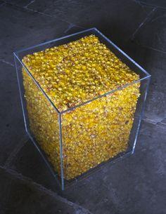 Yellow Helis cube (helichrysums, acrylic)
