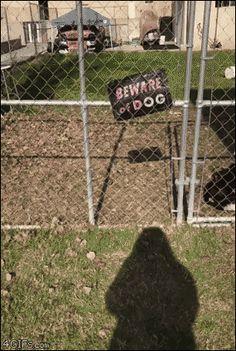 "4gifs: ""Beware of dog! [video] """