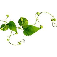 ключ от сердца ❤ liked on Polyvore featuring greenery, nature and vines