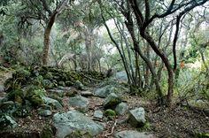 Cerro la campana, Olmue