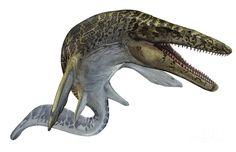 Resultado de imagen para mosasaurus