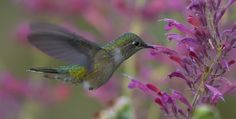 Photograph Hummer 10 by Brandon Downing on 500px