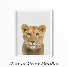 Lioness Print, Lion Wall Art, Nursery Animal, Digital Download, Safari Decor, Large Poster Print, African Animal Print, ,  #428