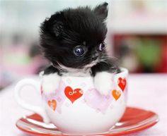 cute baby cat in a cup