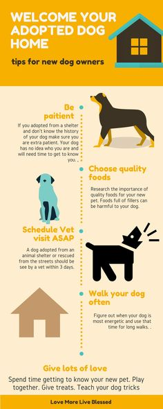 Adopting a dog can be stressful for you and your new dog. Here are a few tips to help you welcome your new dog. Adopting dogs, rescue pets