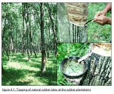 Kinds of Natural Rubber Agricultural Implements, Natural Rubber, Exterior, Nature, Plants, Image, Google, Naturaleza, Farm Tools