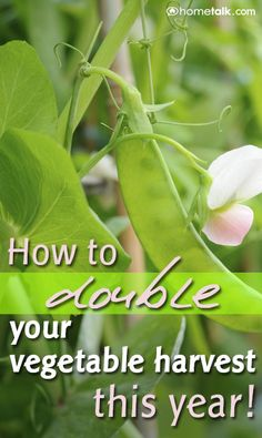 How to {DOUBLE} your vegetable harvest thing year!