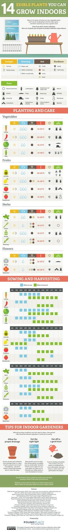 14 Edible Plants You Can Grow Indoors #Infographic #Gardening #Plants