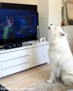 Animal Jokes, Funny Animal Memes, Cat Memes, Cute Animal Videos, Cute Animal Pictures, Funny Dog Videos, Funny Dogs, Pet Videos, Dogs Video
