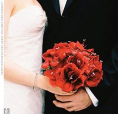 The Bridal Bouquet (Amaryllis)