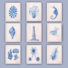 Set of 9 Prints, 8x10, sea related theme. Lighthouse Print, Seashells, Argonauta,  Venus comb, Sea horse. $85.00, via Etsy.
