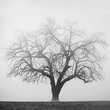 Resultado de imagem para oak tree tattoo