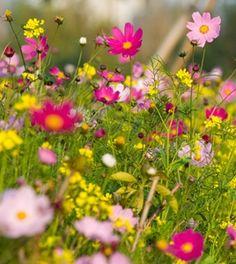 How to Grow the Best Wildflower Garden