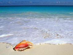 beautiful sea shell on a colorful beach