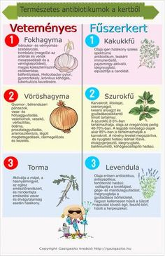 Requisites Of The Home Vegetable Garden