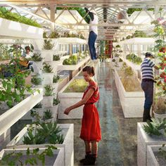 The World's First Commercial Rooftop Aquaponics Farm