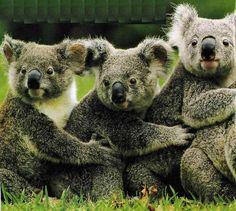 Aren't They Cute ( Haiku )