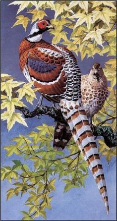 Elliot's Pheasants - Charles Tunnicliffe... These would have been included in the original Thanksgiving Dinner.