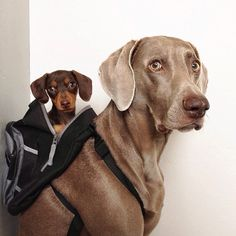IdeaFixa » Amizade canina