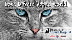 Love is four-legged world. | Tuscawilla Animal Hospital has veterinarians that care about cats and dogs too! Call us today to schedule an appointment. #veterinarymedicine #animalhospital Veterinary Medicine, Veterinarians, Four Legged, Schedule, Dog Cat, Cats, Animals, Timeline, Gatos
