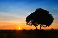 The tree and the sun by Vey Telmo, via 500px