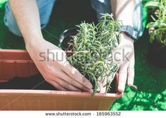 close up of man hands gardening on the balcony at home  - stock photo BUY IT FROM $1 ON SHUTTERSTOCK