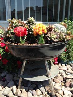 My small garden, garden barbecue, succulents, cactus, BBQ