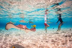 Our amazing Bora Bora photo lagoon tour and motu Polynesian picnic lunch with the talented underwater photographer from Bora Bora Photo Video. Bora Bora Activities, Bora Bora Photos, Underwater Photographer, Wedding Honeymoons, Places To Travel, To Go, Photo And Video, Outdoor Decor
